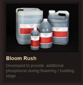 Bloom Rush rev3